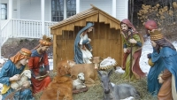 Golden Retriever sitting in lawn nativity scene