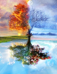 Tree mirrored in water showing all four seasons